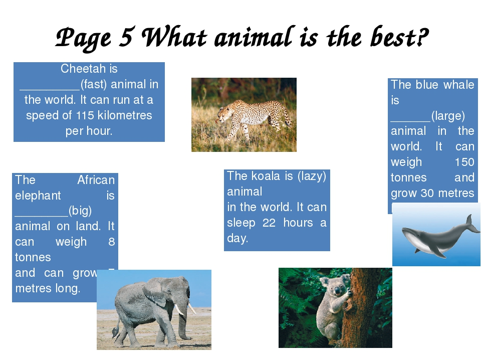 Page 5 What animal is the best? Cheetah is _________(fast) animal in the worl...