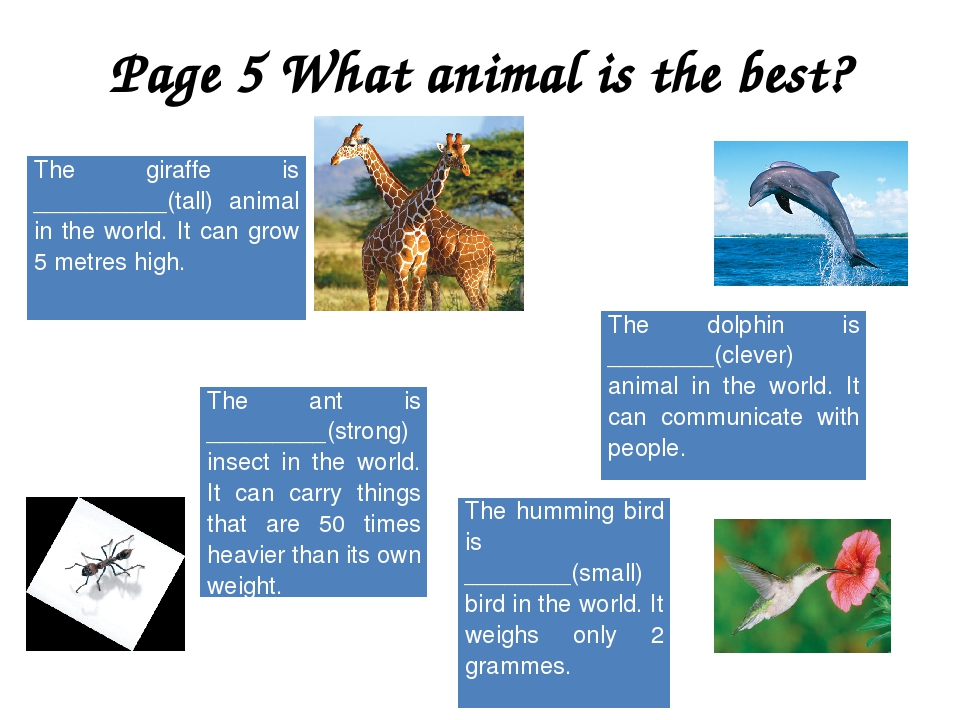 Page 5 What animal is the best? The giraffe is __________(tall) animal in the...