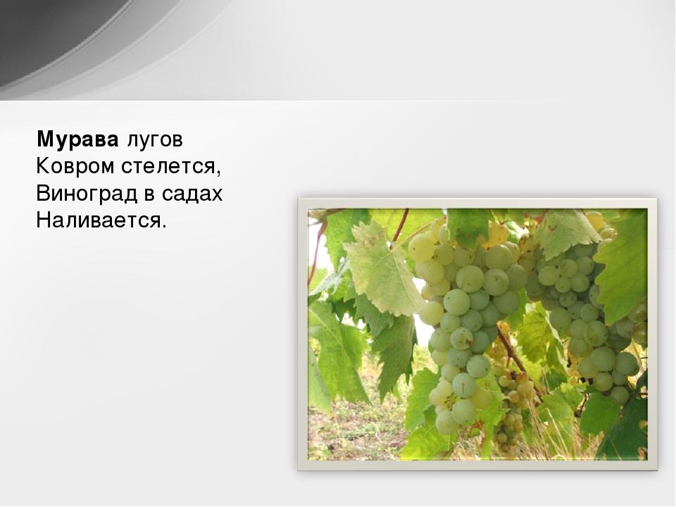 3 сентября день винограда стихи тем что, все