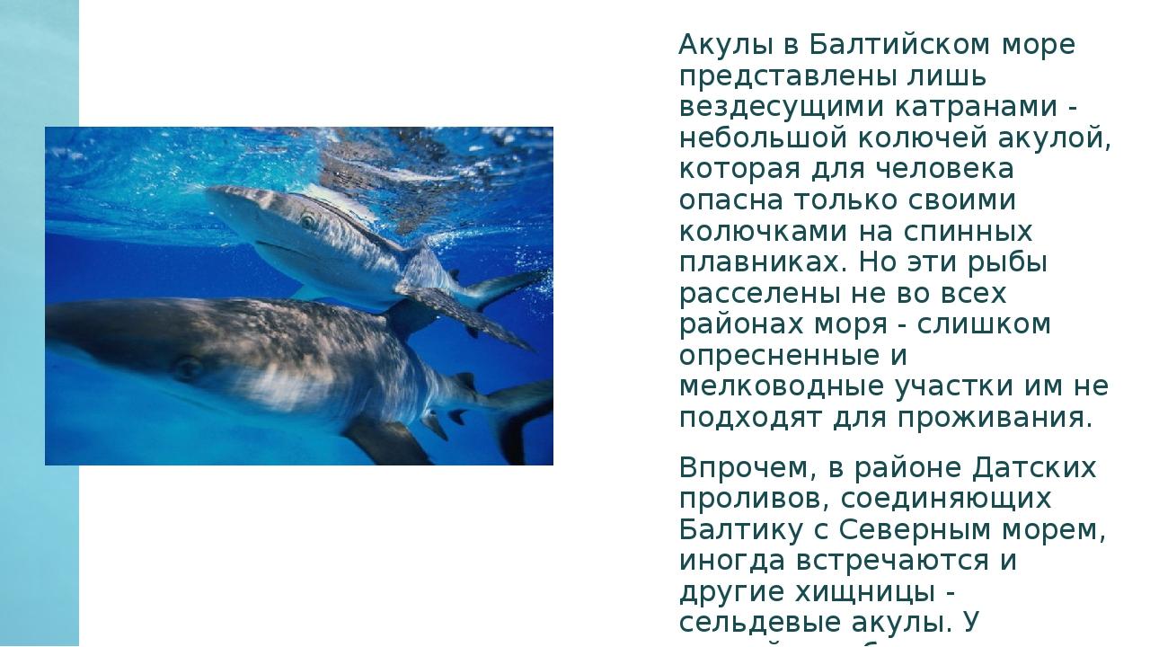 подходят для на чёрном море есть акулы холодно