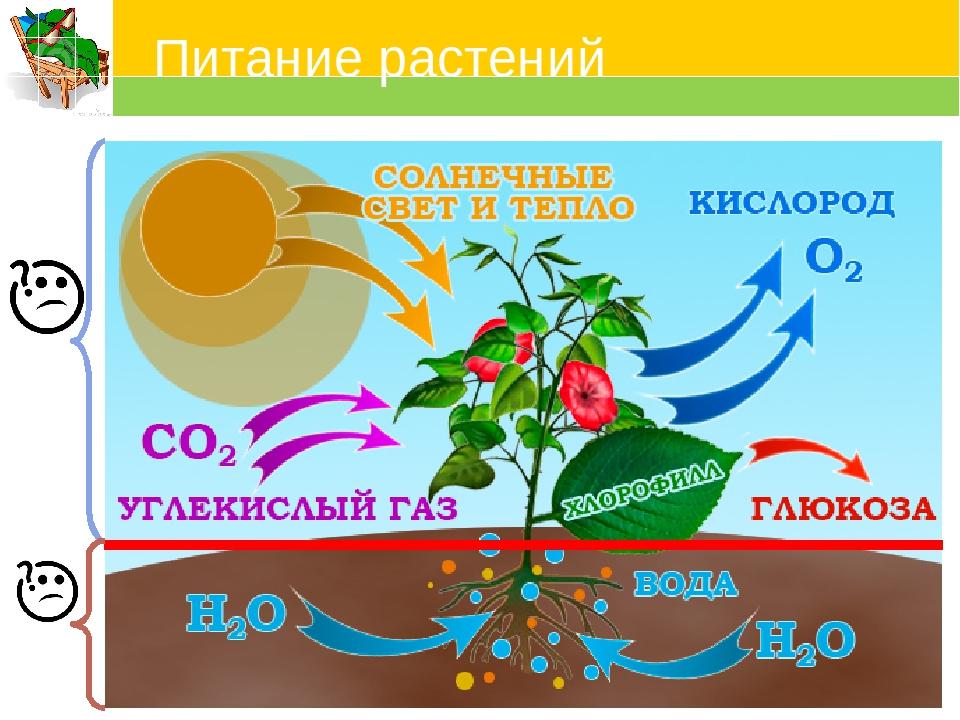 процесс фотосинтеза у растений фотографии диска