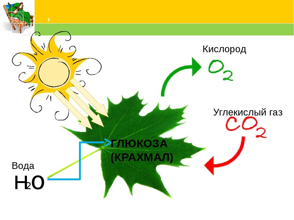 схема фотосинтеза отмечена буквой вашему вниманию