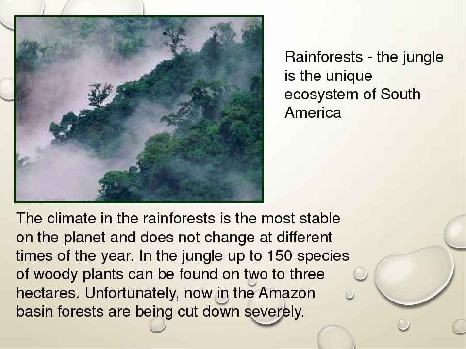 explain why rainforests are fragile ecosystems Losses in biodiversity in rainforests cause significant changes in ecosystem functioning about ecosystem functioning in tropical rain forests we know very little, but we do know that ecosystems are affected by changes in the number and kinds of species which they contain, an idea originally conceived by charles darwin and alfred russel wallace.