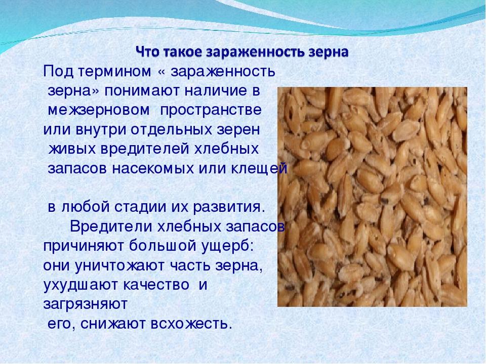 Под термином « зараженность зерна» понимают наличие в межзерновом пространств...