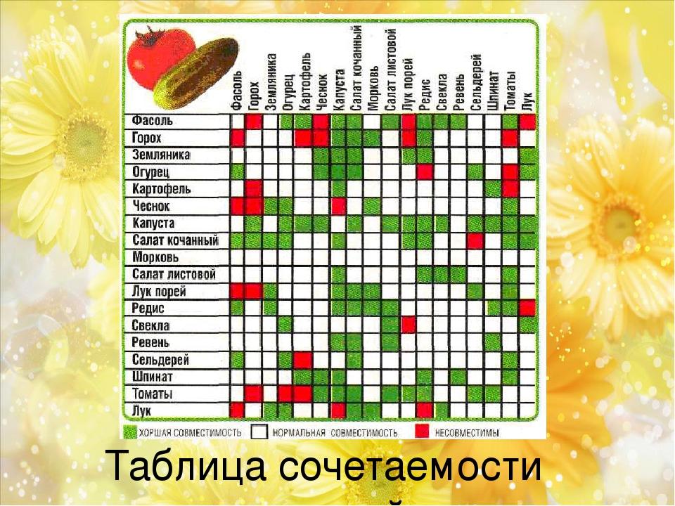 Таблица сочетаемости растений.