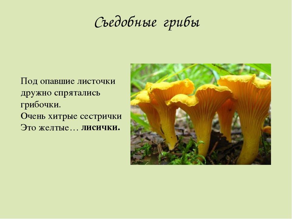 загадка про грибы лисички