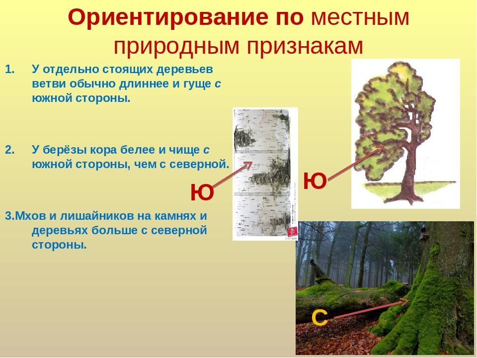 Ориентация объекта на картинке