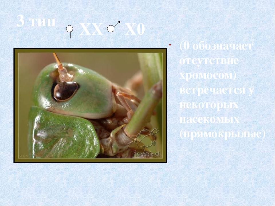 4 тип Встречается у некоторых насекомых (равнокрылые- цикады, тли) Х0 ХX