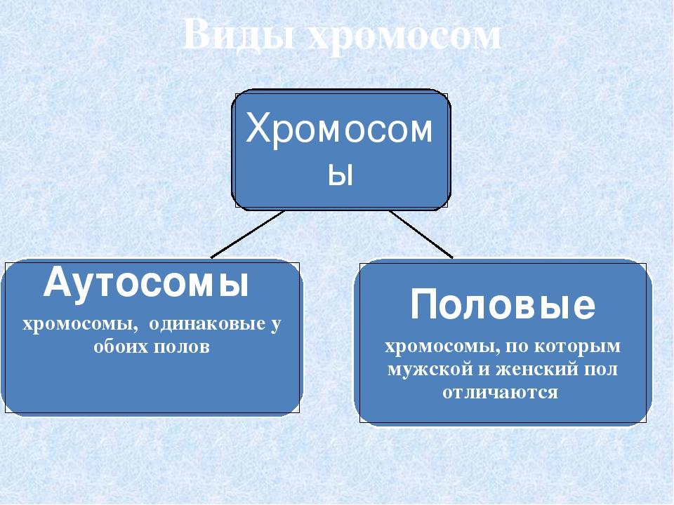 Набор хромосом человека Женщины – 2 х 22 пары + XX, Мужчины – 2 x 22 пары + XY,