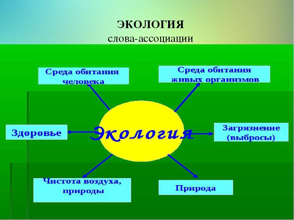 картинка понятия экология