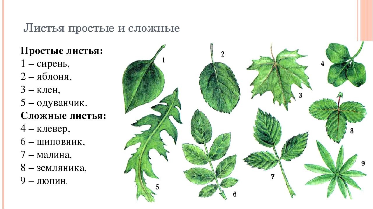 декорируем названия листов в картинках серьги