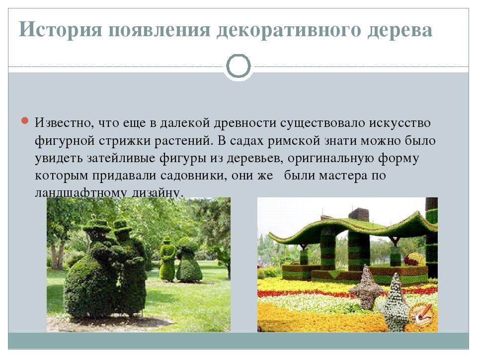 История появления декоративного дерева Известно, что еще в далекой древности...