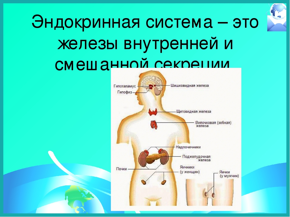 фото картинки эндокринной системы хотелось