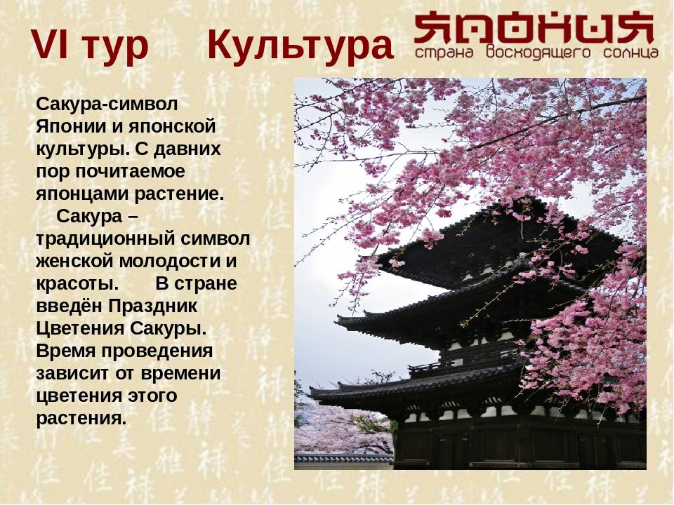 VI тур Культура Сакура-символ Японии и японской культуры. С давних пор почита...