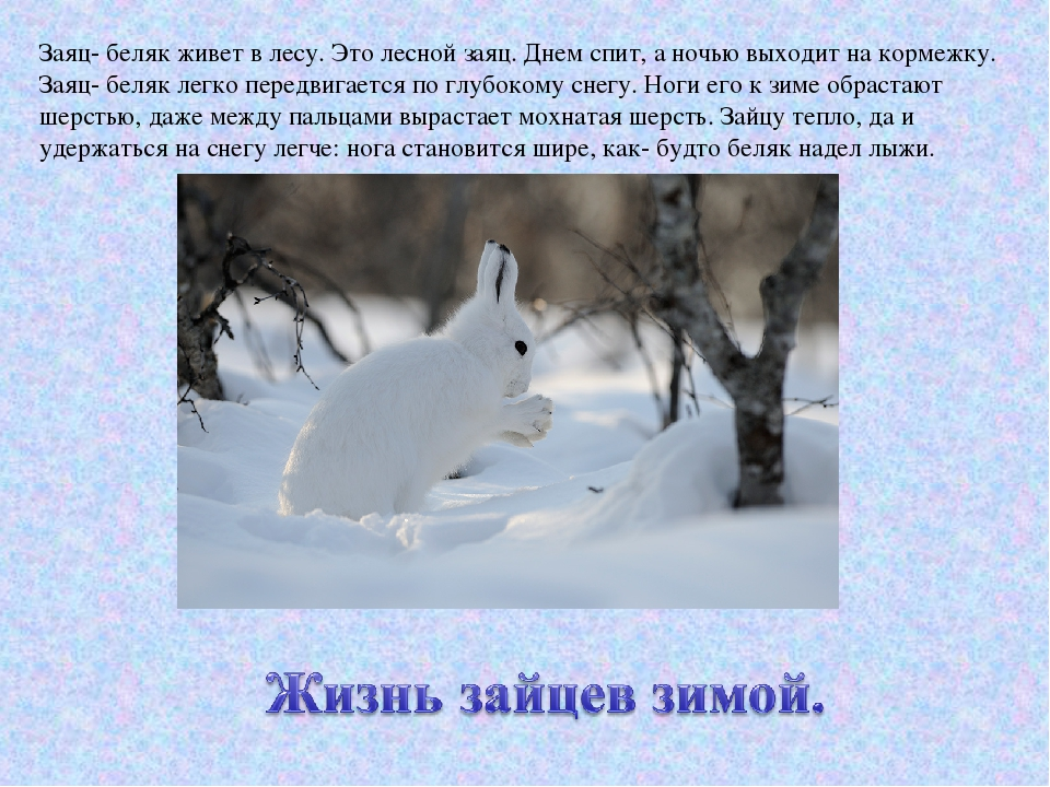 Картинка где живет заяц зимой