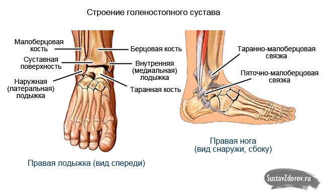 Голеностопный сустав аномалии развития узи суставов кистей рук в новосибирске