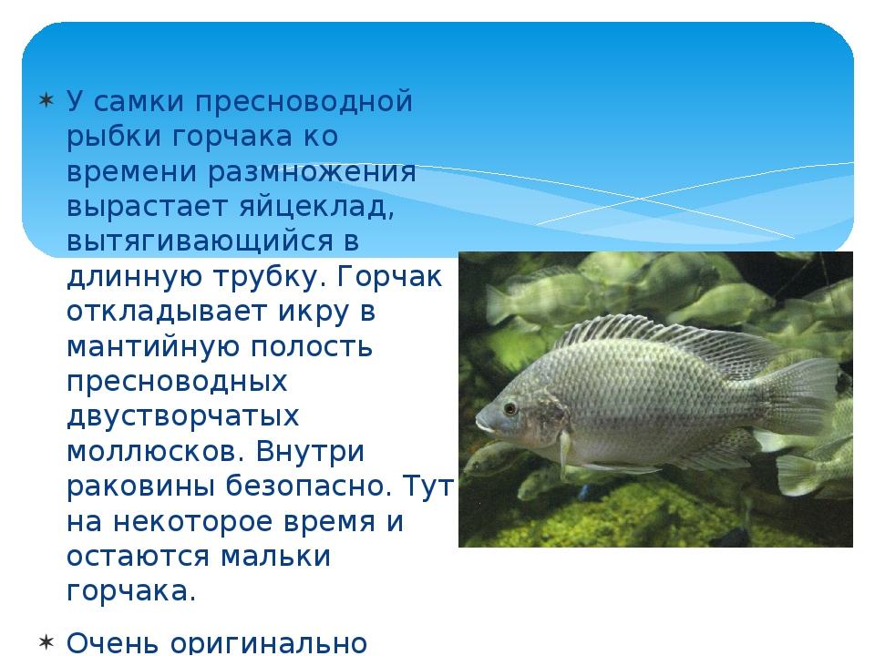 появления размножение и развитие потомства у рыб фото принципе нет