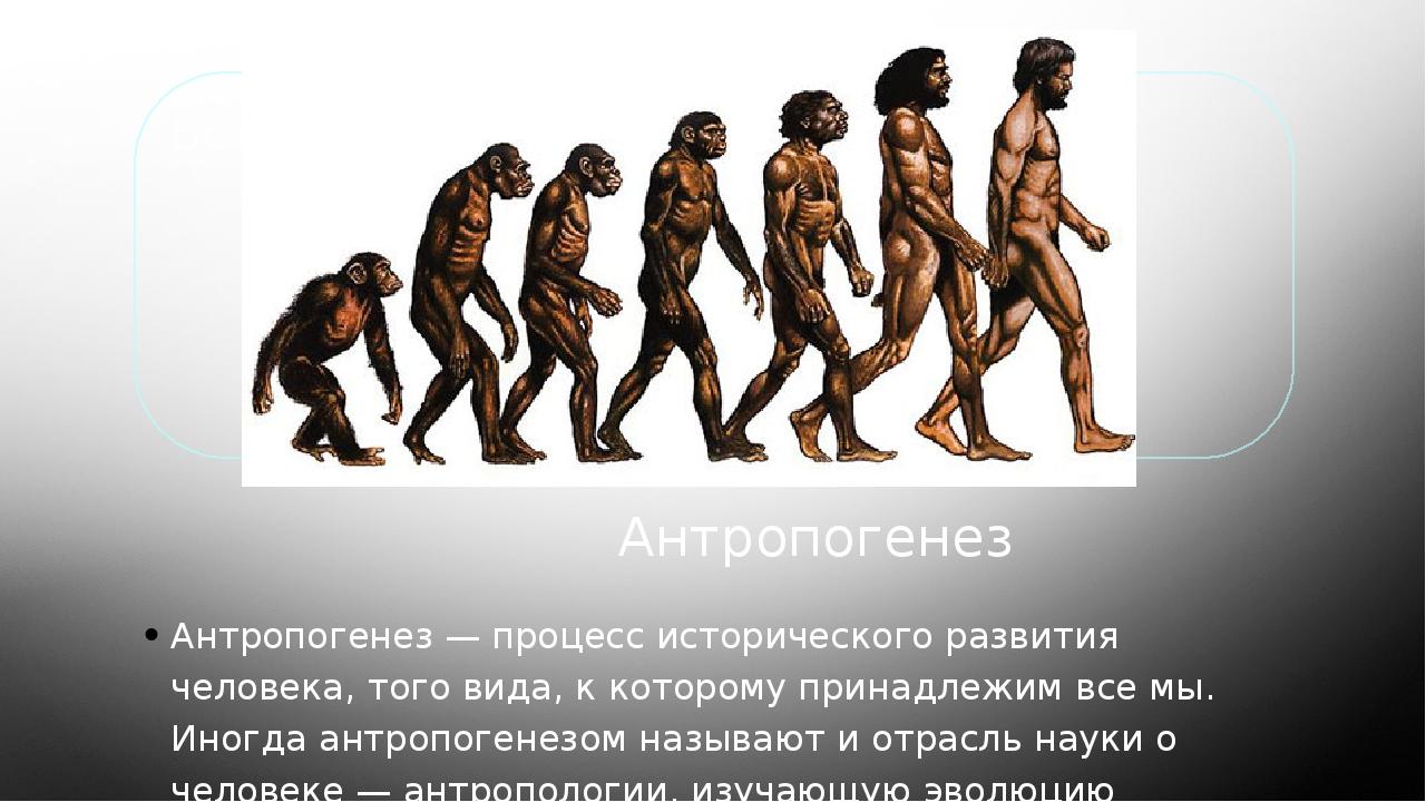 Антропогенез Антропогенез — процесс исторического развития человека, того ви...