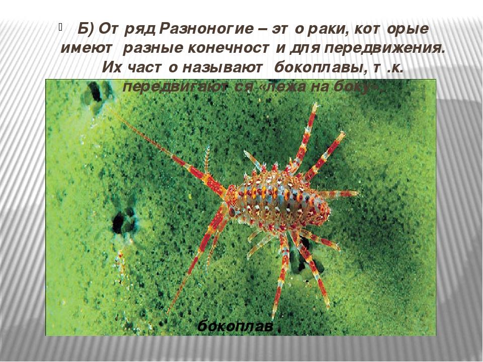 бокоплавы биология