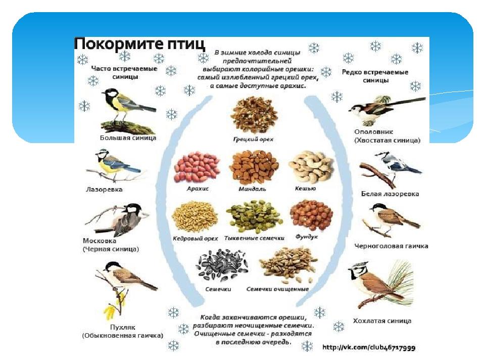 Картинки чем питаются птицы зимой
