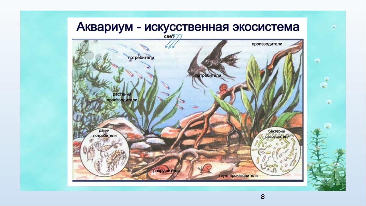 том, экосистема аквариума картинки можете