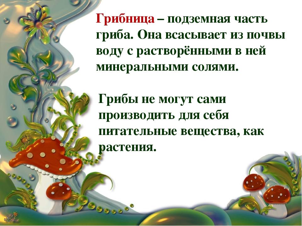 Грибница – подземная часть гриба. Она всасывает из почвы воду с растворёнными...
