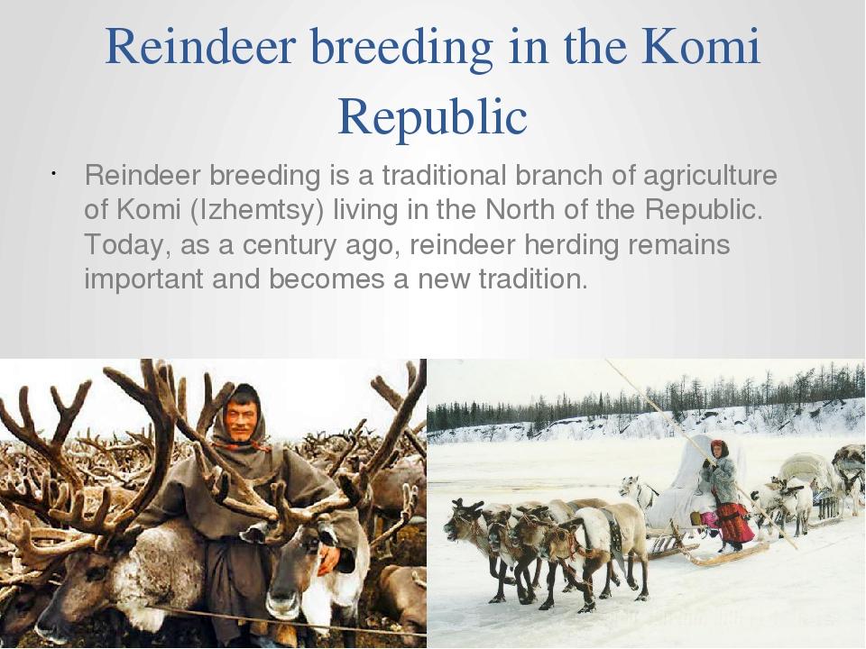 Reindeer breeding in the Komi Republic Reindeer breeding is a traditional bra...