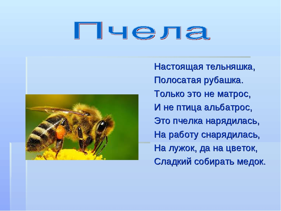 загадки картинки о пчелах