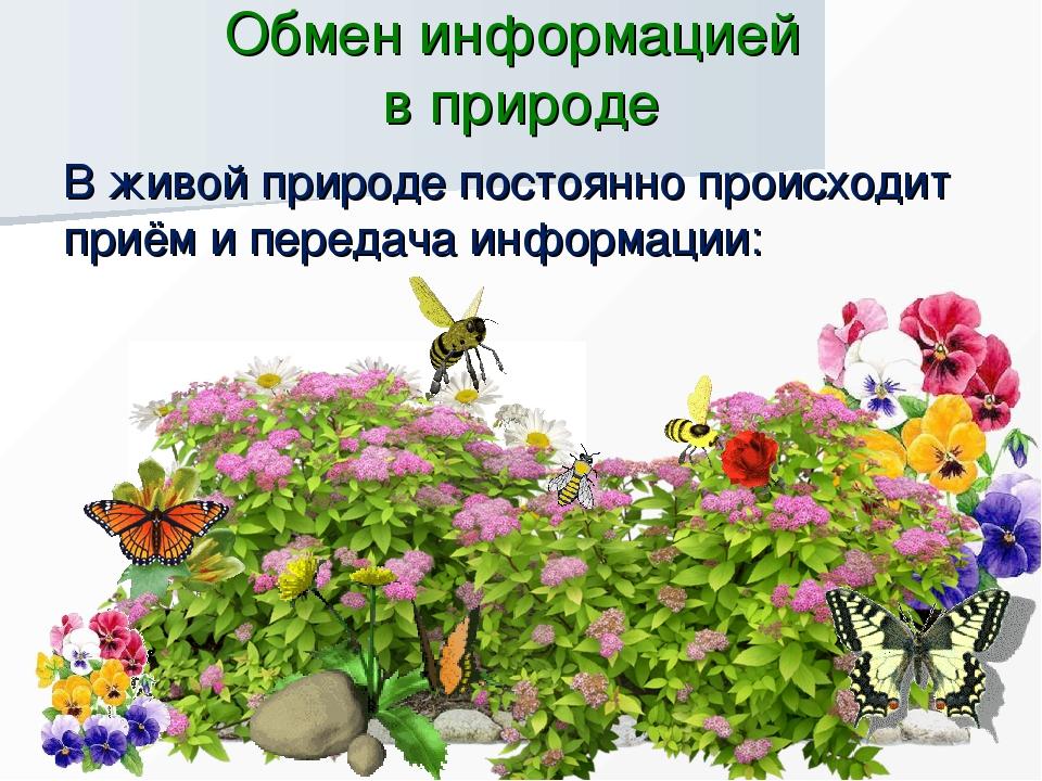 Обмен информацией в природе В живой природе постоянно происходит приём и пере...