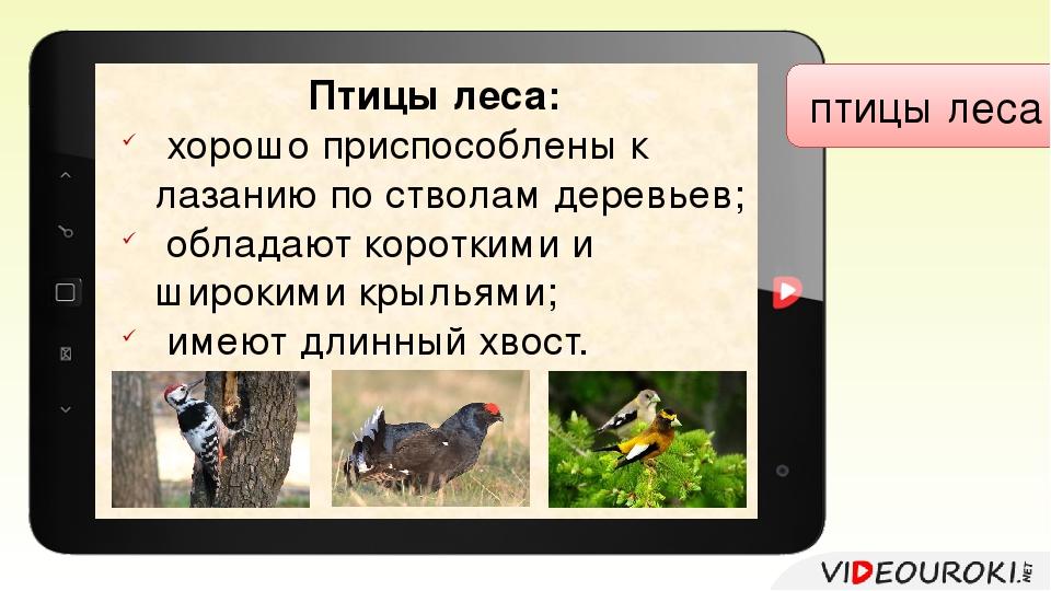 птицы леса Птицы леса: хорошо приспособлены к лазанию по стволам деревьев; о...