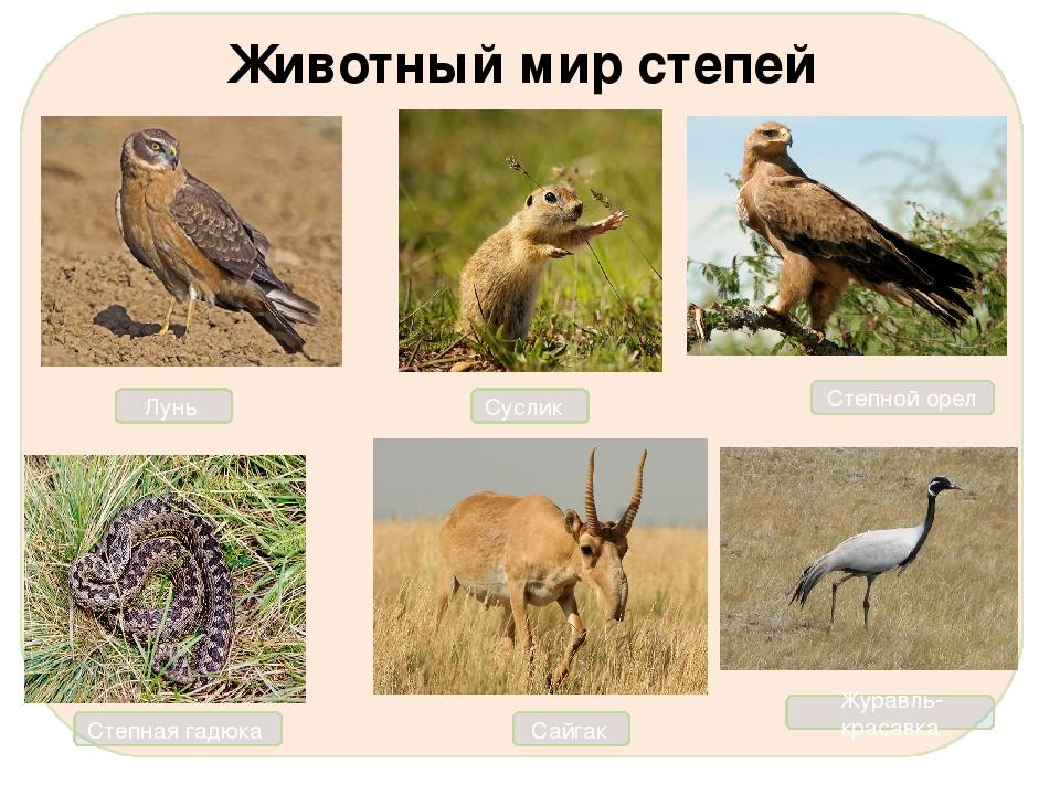 генерация модели животные степи в россии фото и названия фасад