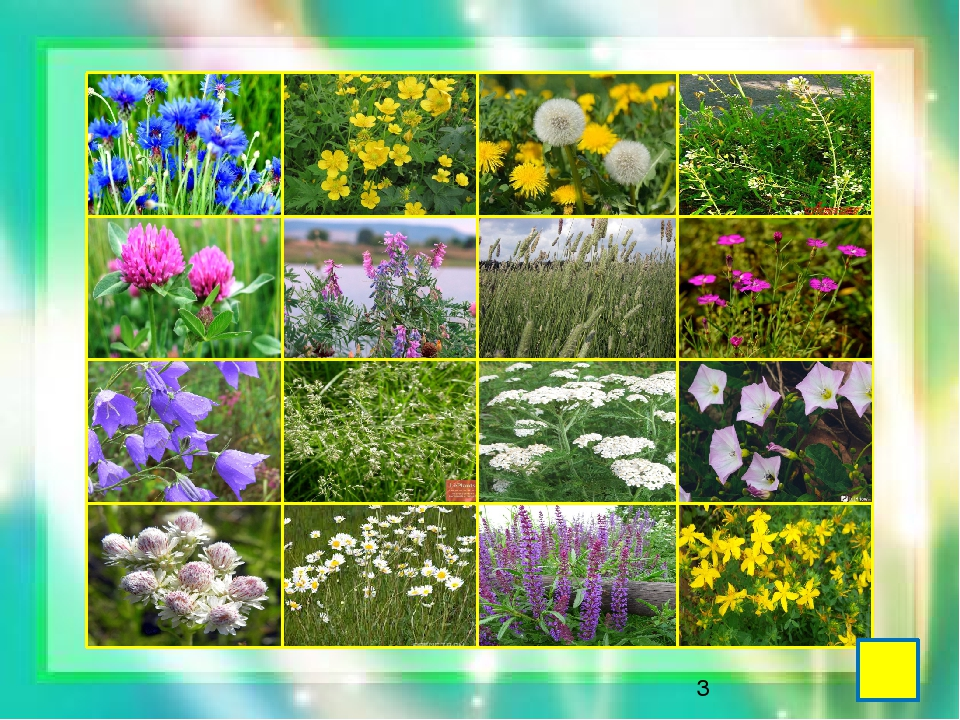 Названия растений с фотографиями для гербария результаты