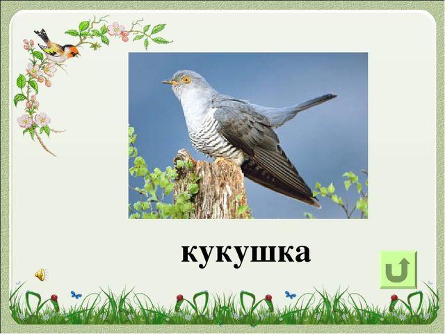Единственная в мире птица, у которой вообще нет крыльев, это киви. Живёт она...