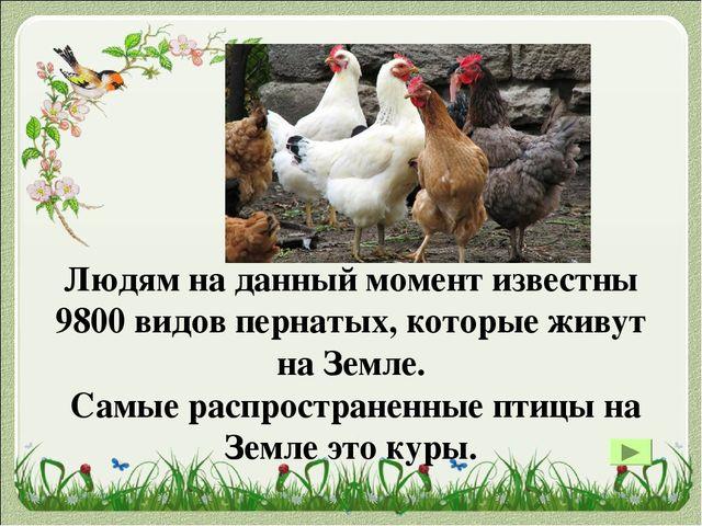 Самая тяжелая по весу птица из тех, которые могут летать, — это дудак или дро...