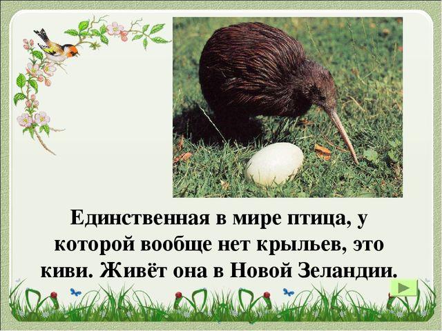 Колибри – самая маленькая птица на планете. Яйцо колибри самое маленькое в ми...