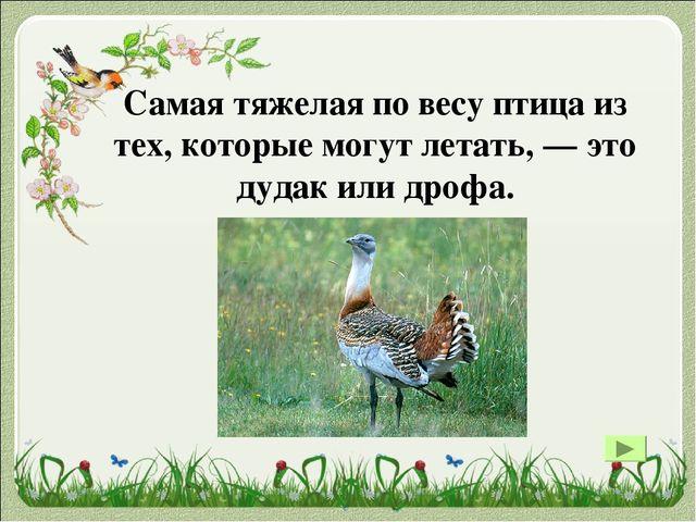Самая большая птица в мире – страус. Имеет рост от 2 м. Страус очень быстро б...