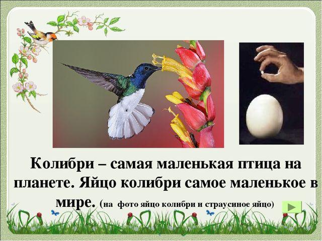 Самый большой представитель пернатых, который умеет летать, — кондор. У него...