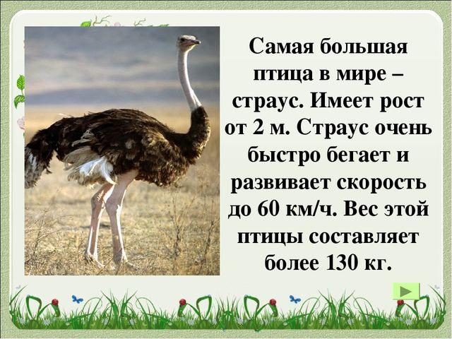 Самый большой размах крыла имеет странствующий альбатрос. Зафиксирован максим...