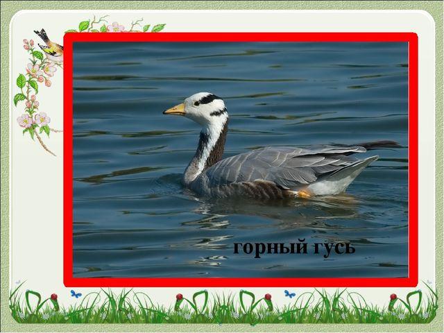 «Рыбе – вода, птице - воздух, зверю – лес, степи, горы. А человеку нужна Роди...