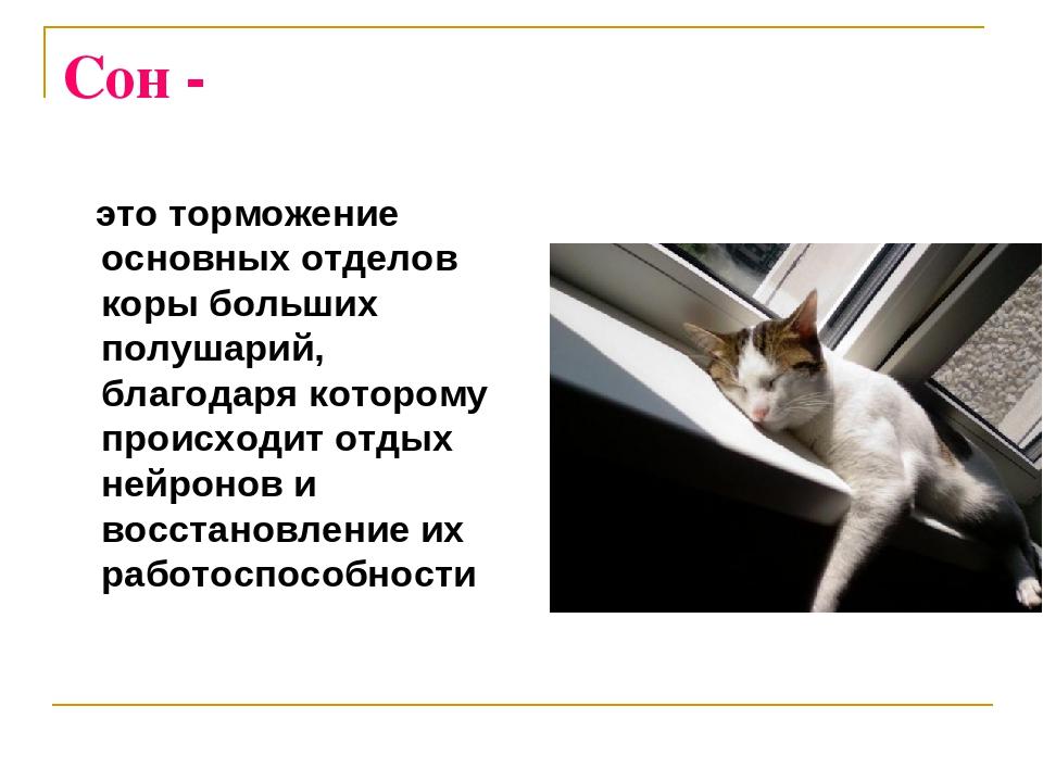 Сон - - это торможение основных отделов коры больших полушарий, благодаря кот...