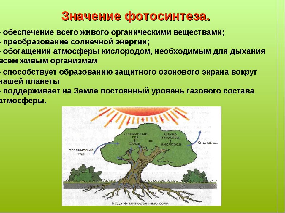 панель роль появления фотосинтеза на земле критерии поиска