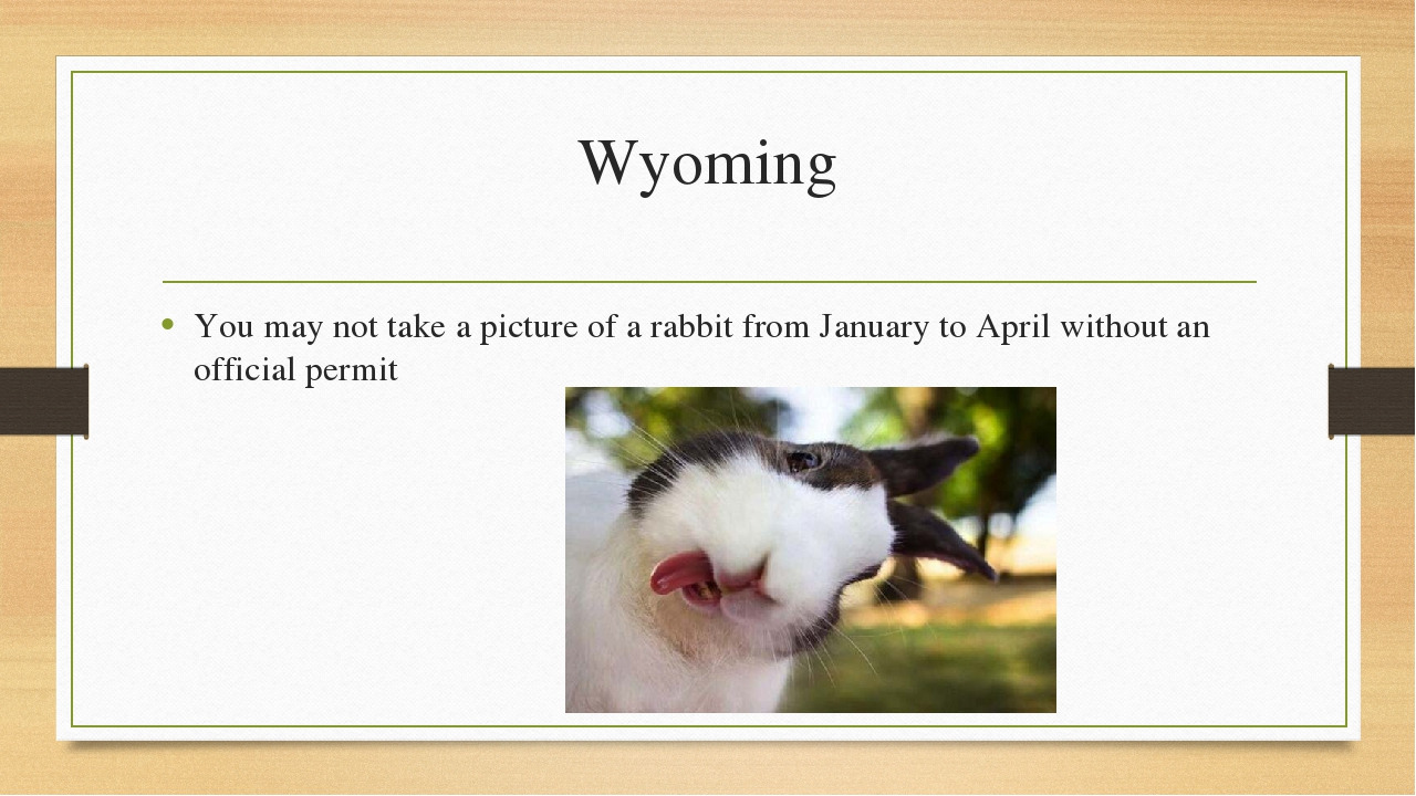 Wyoming You may not take a picture of a rabbit from January to April without...