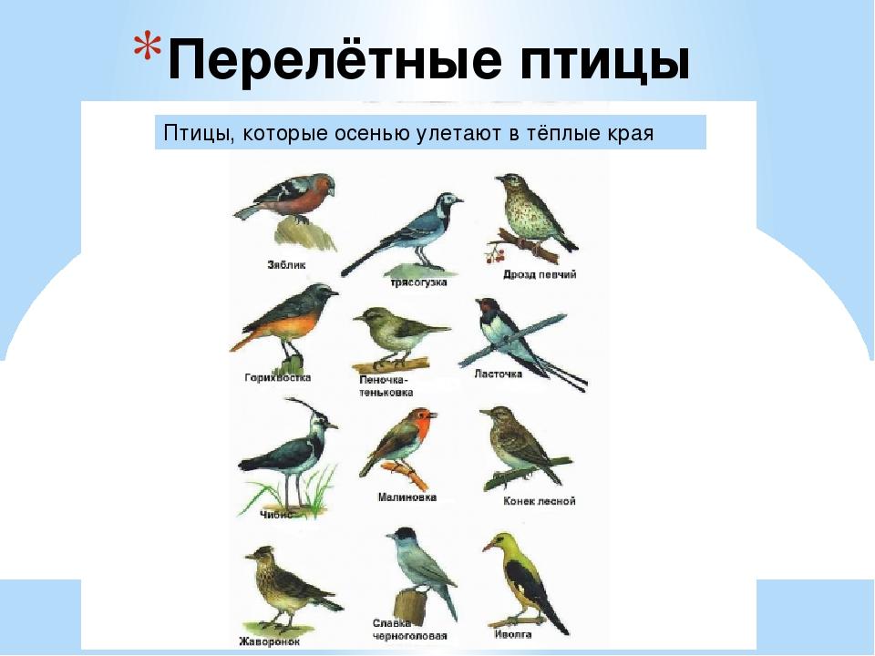 Птицы которые улетают на зиму из москвы