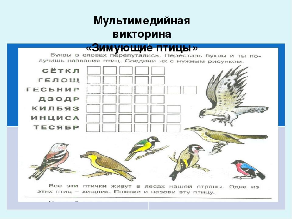 некоторые викторина о птицах картинка пальто воротником-стойкой можно
