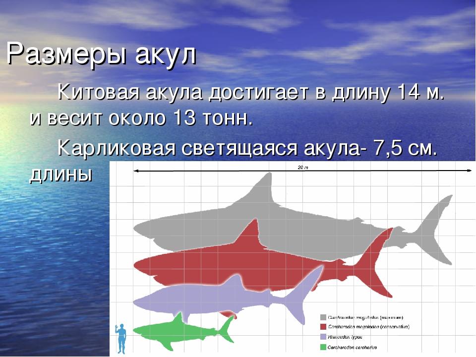 презентация картинок про акул бокам