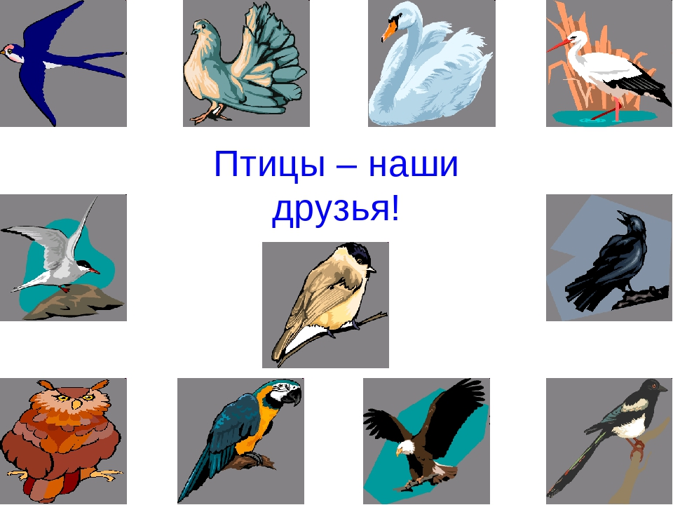 картинка птицы наши друзья