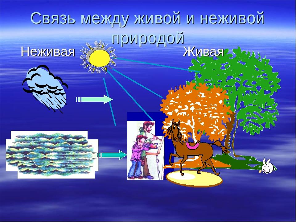 Картинки взаимосвязь в природе