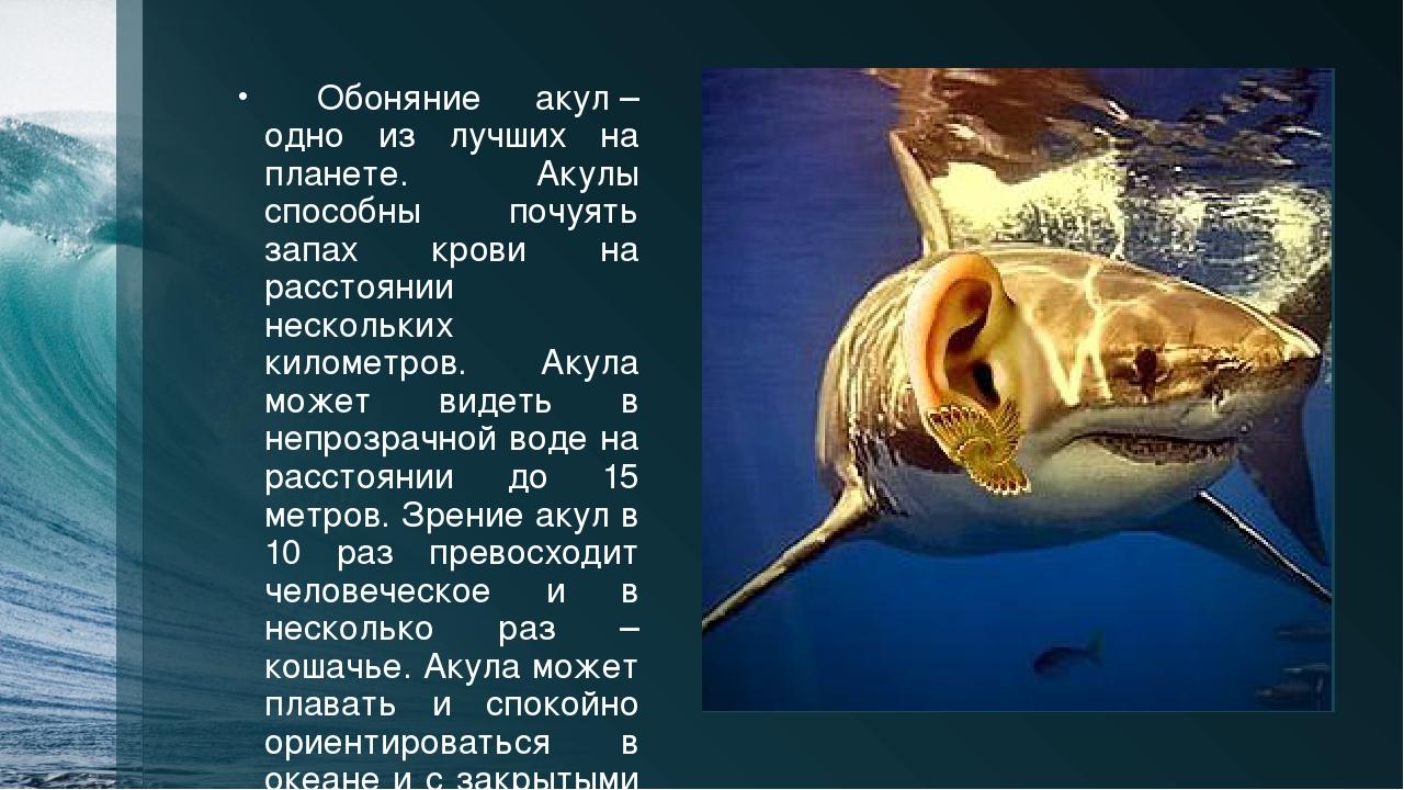 после картинка акулы и описание одном кладбищ столицы
