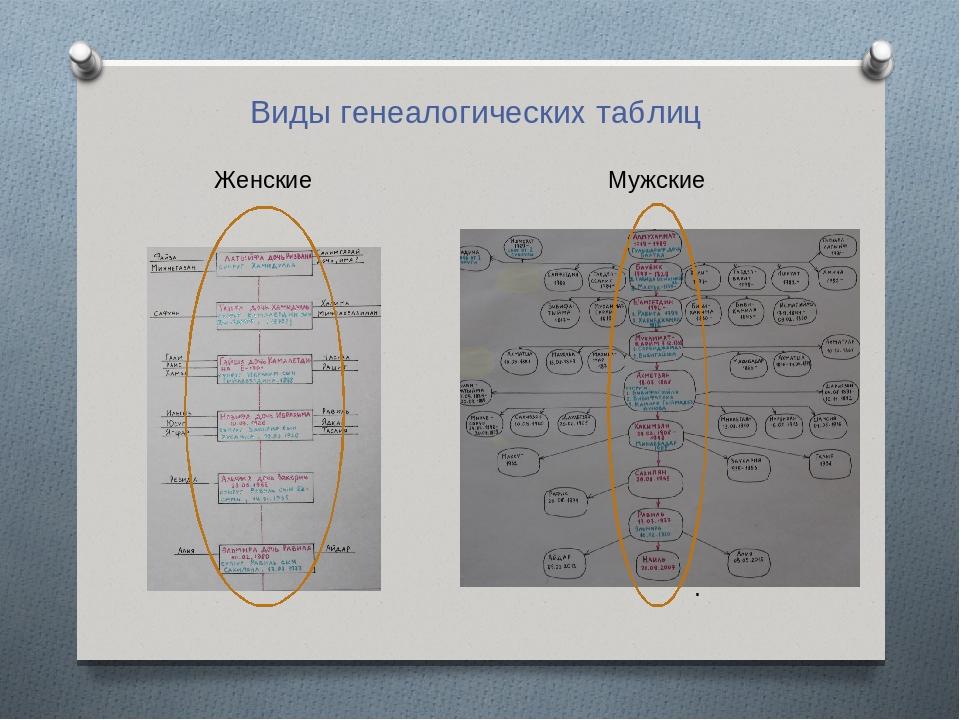 . Женские Мужские Виды генеалогических таблиц