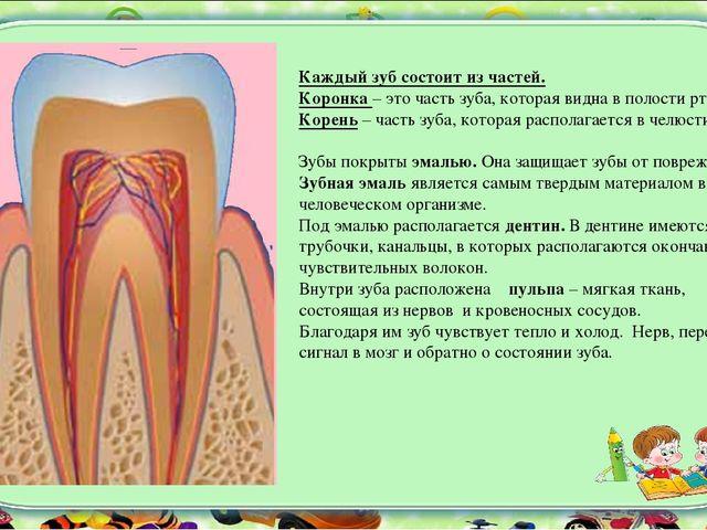 Коронка зуба имеет